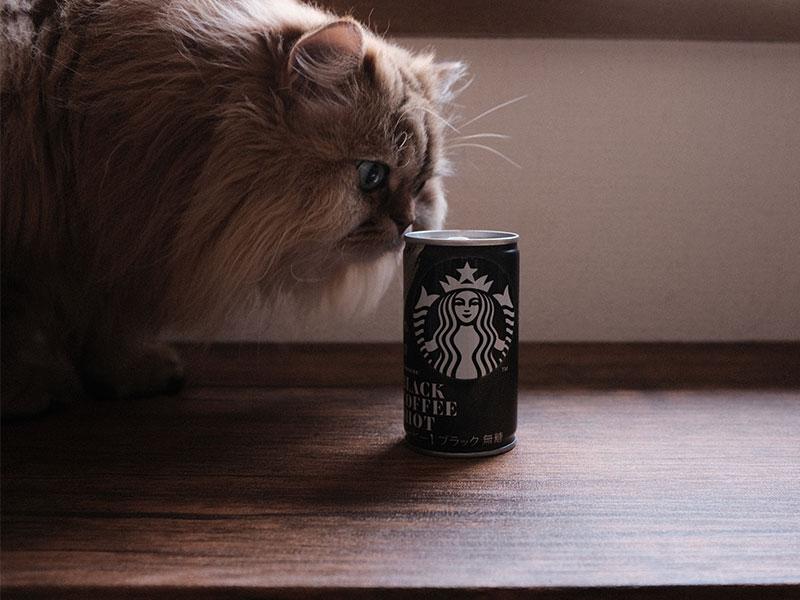 「ブラックコーヒーショット」と猫の写真