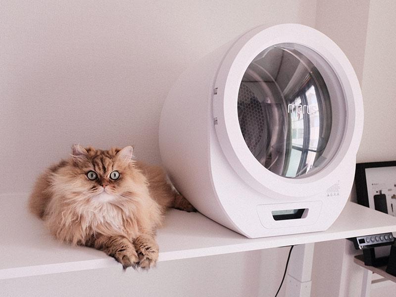 「Morus Zero」と猫の写真