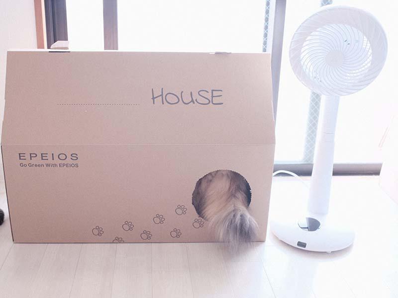 段ボールのキャットハウスに猫が入る写真